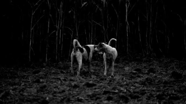 エイズの犬 - ハリヤナ州点の映像素材/bロール