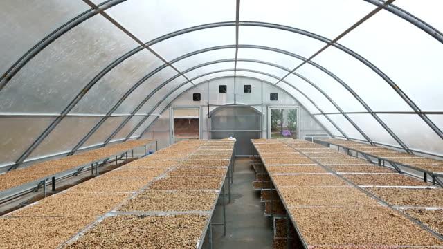 HD Film Tilt: Coffee beans drying solar plantation house video