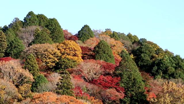 秋の赤のまま名古屋で映画傾斜ショットこうらんけい森林公園 - トヨタ点の映像素材/bロール