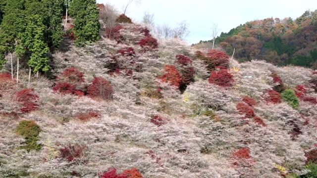 映画はショットを傾ける: 小原トヨタ名古屋日本出発 - トヨタ点の映像素材/bロール