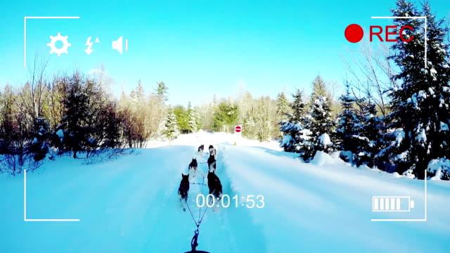 Filming dog sledding on a digital camera