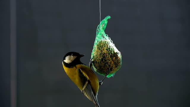 Finch Feeding from a Mesh Feeder video