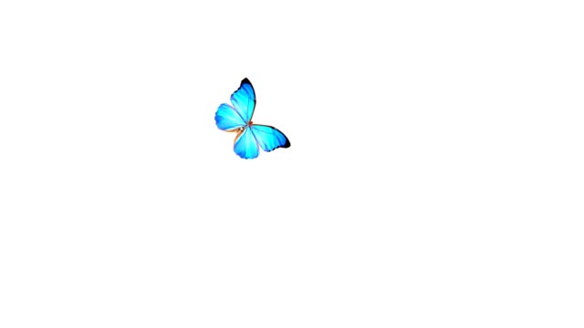 fine butterfly flying around and landing. - butterfly stock videos and b-roll footage