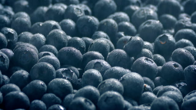 fine spray keeps blueberries fresh - bacca video stock e b–roll