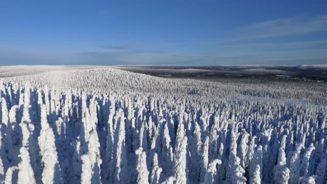 finska lappland antenn footage - tung snö skog - pine forest sweden bildbanksvideor och videomaterial från bakom kulisserna