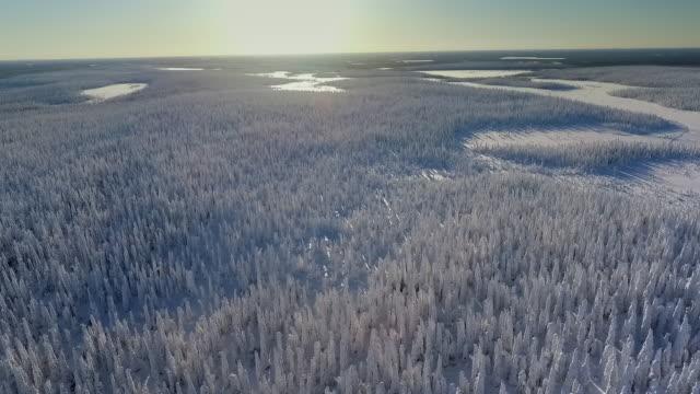finska lappland antenn footage - tung snö skog - finland bildbanksvideor och videomaterial från bakom kulisserna