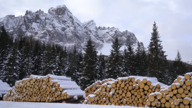 fir logs cut and stacked