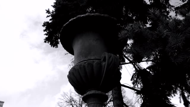 A fir tree above the park fence video
