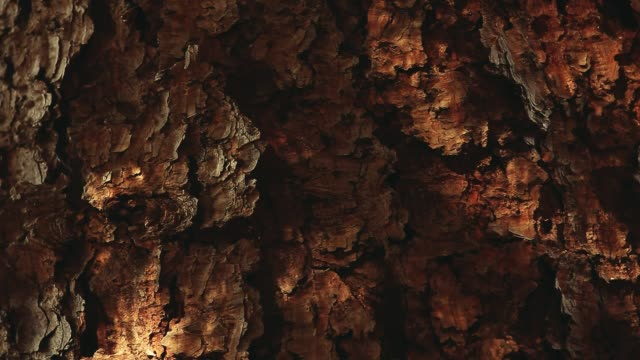 Fir tree sun lights hd footage