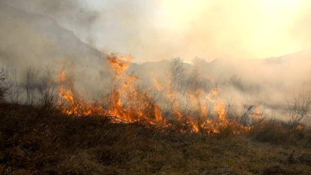 Fire and Smoke, dry grass is burning video