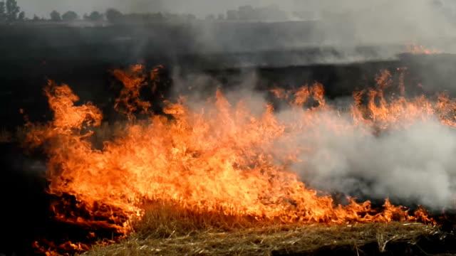 vidéos et rushes de incendie dans un champ agricole - foin