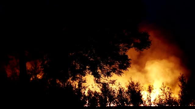 fire at night - haryana video stock e b–roll