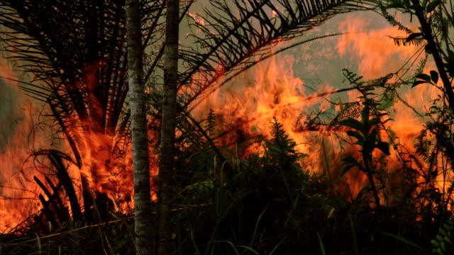 Fire burning down the forest video