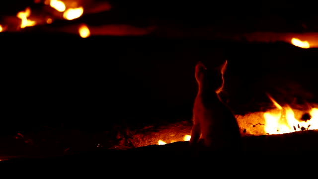 Fire Cat. Cat-firefighter video