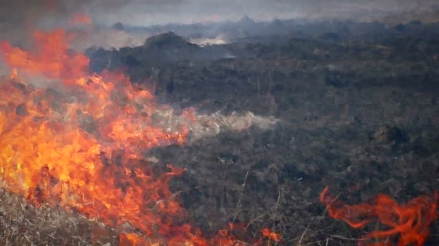 fire dry grass in forest. - incendio doloso video stock e b–roll