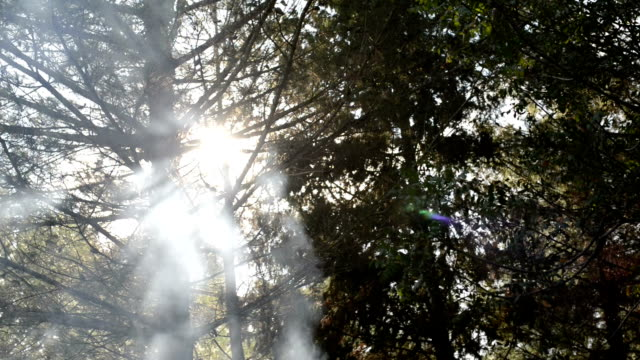 Fire In Forest Making Lot Of Smoke And Fog Playing With Rays Of Sun video