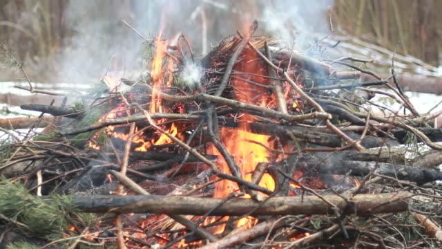 vídeos y material grabado en eventos de stock de fuego en el antiguo bosque - sparks
