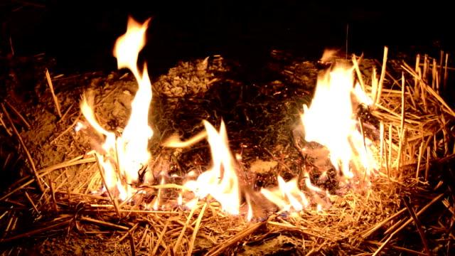 fuoco nel campo - haryana video stock e b–roll