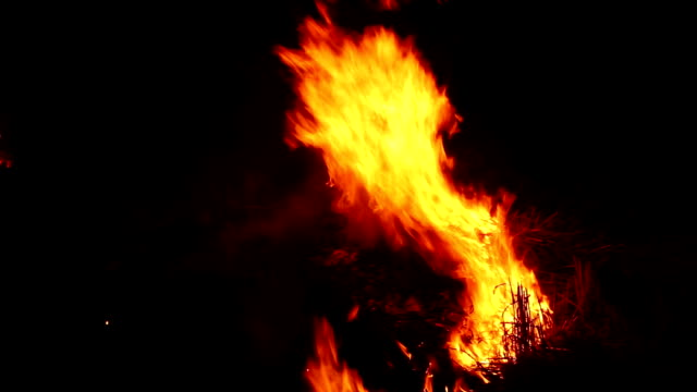 fire in the forest at night - furioso video stock e b–roll