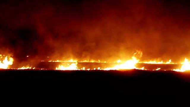 夜森を火します。 - ハリヤナ州点の映像素材/bロール
