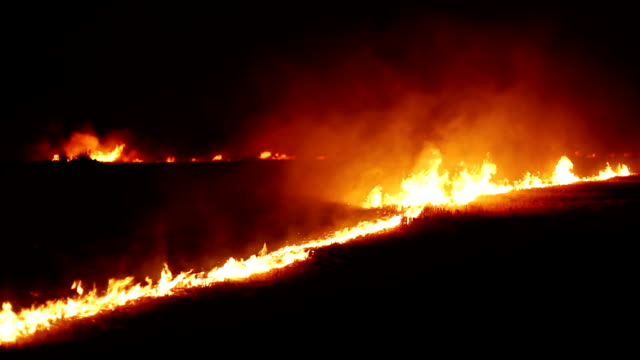 fire in the forest at night - haryana video stock e b–roll