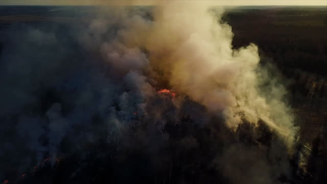 eld i skogen, brinnande träd och gräs. naturliga bränder - skog brand bildbanksvideor och videomaterial från bakom kulisserna