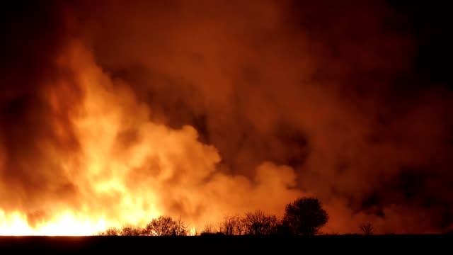 brand i naturen, natur katastrof, ånga, rök och partiklar, miljö skador, belyst, fara, kaos, kris - släcka bildbanksvideor och videomaterial från bakom kulisserna