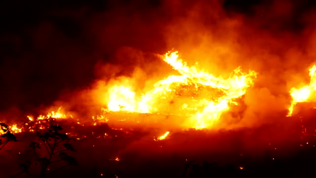 Fire Line Fire and flames in a forest on a black hell stock videos & royalty-free footage