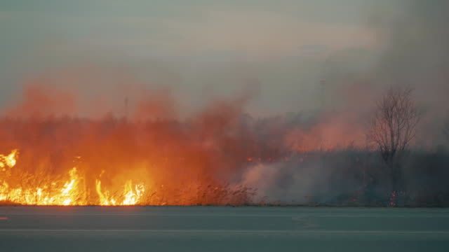 Fire on the roadside near the village. - vídeo