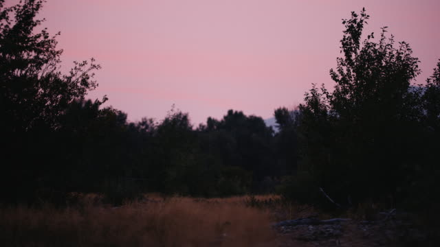 A fire red sunset over trees and grass slowly blowing in the wind, this shot is perfect for graphics or a logo. video