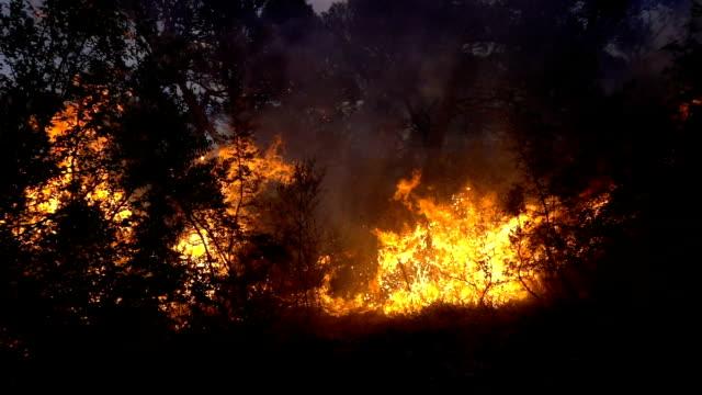 brand storm i skogen i skymningen - skog brand bildbanksvideor och videomaterial från bakom kulisserna