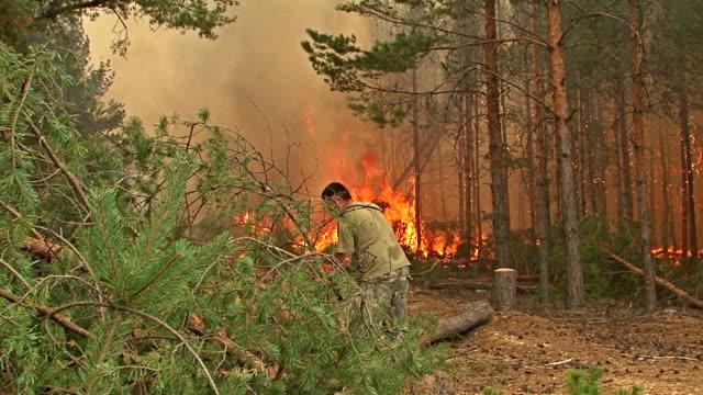 fire storm in the mountain forest, fire destroys trees - skog brand bildbanksvideor och videomaterial från bakom kulisserna