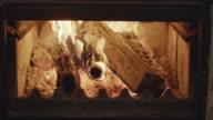 istock Fire 1199718784