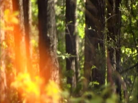 fire - 枝 植物部分 個影片檔及 b 捲影像