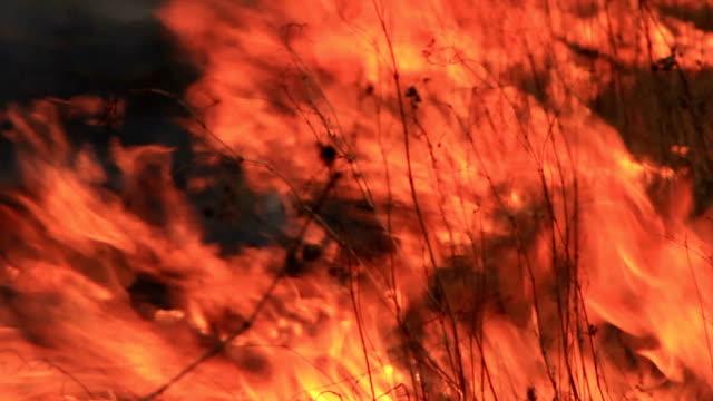 Fire video
