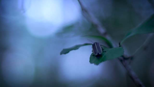 vídeos y material grabado en eventos de stock de luciérnes en el bosque nocturno - organismo vivo