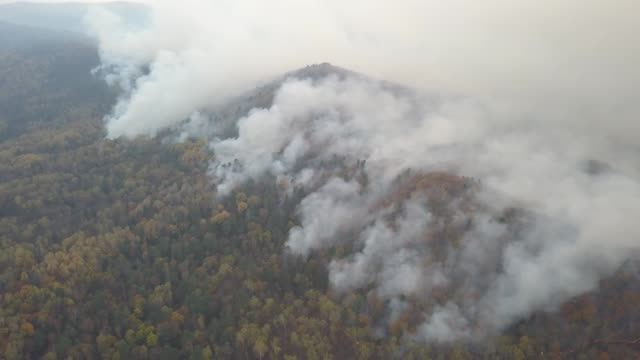 Fires in Russian forest, Transbaikal forest in fire, burning Fires in the Russian forest, Transbaikal forest in fire, burning of forests siberia stock videos & royalty-free footage