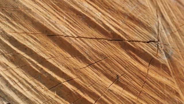 薪テクスチャは、ツリーのログゆっくりとパン 4 k 2160 p 30 fps ultrahd 映像 - 閉じる分割モール年輪 3840 x 2160 uhd パンと木の断面にひびのビデオ - 木目点の映像素材/bロール