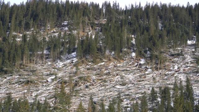 嵐によって打たれたもみ - 全壊点の映像素材/bロール