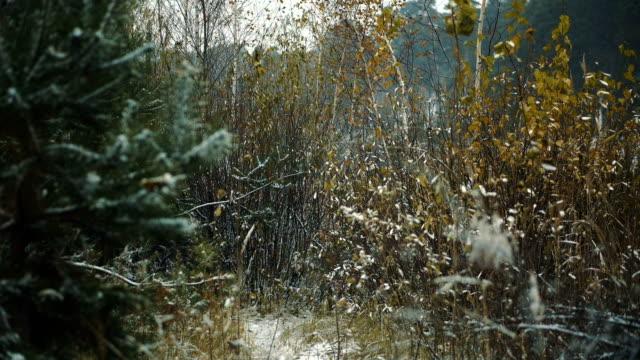schneit es im herbst. - rohrblattinstrument stock-videos und b-roll-filmmaterial