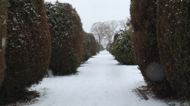 First person view of walking in the winter season trough cemetery with snow on the path and trees with camera shake