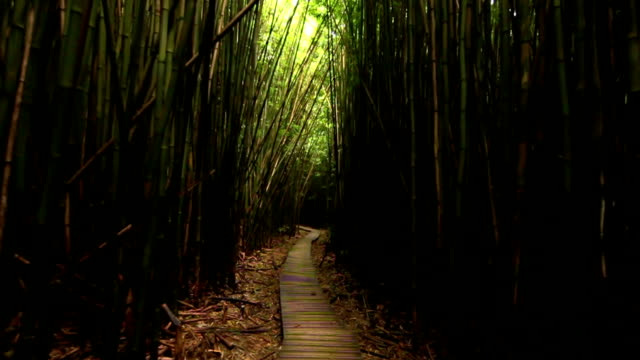 First Person View, Walking Thru Bamboo Forest ( Slow Motion) video