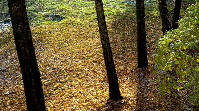 First snow falling on yellow leaves and green grass video