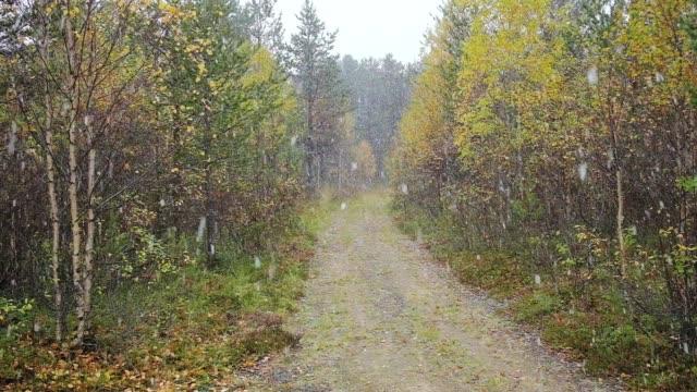 stockvideo's en b-roll-footage met eerste sneeuw in de herfstbos met landweg - fresh start yellow