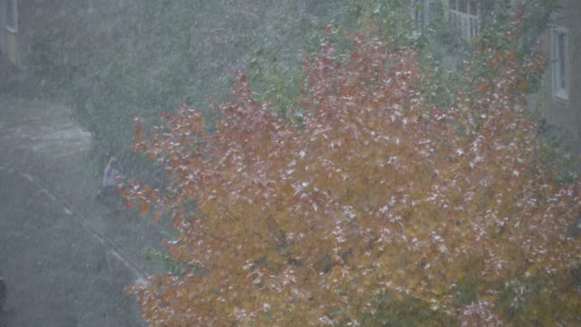 first snow in early fall october leaf orange - ноябрь стоковые видео и кадры b-roll