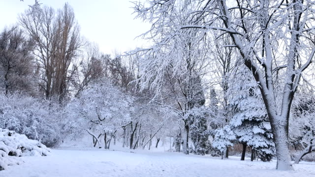 First snow in the city park. Red dog walking runs around the park. video