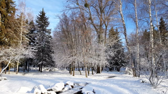 First snow in the city park with trees under fresh snow at sunrise video