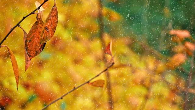 vídeos de stock, filmes e b-roll de primeira neve sobre as árvores de outono - setembro amarelo