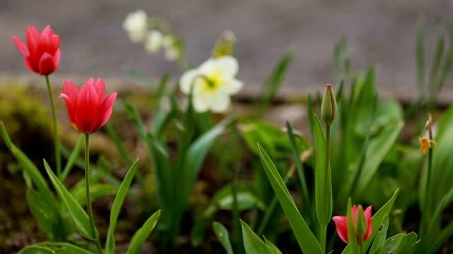 Royalty free edible flower hd video 4k stock footage b roll istock first spring flowers in the garden video mightylinksfo