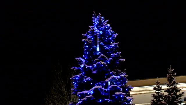 Fir-tree in the winter. video